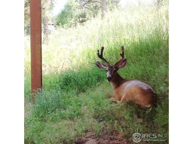 37 – 4841 Deer Trail
